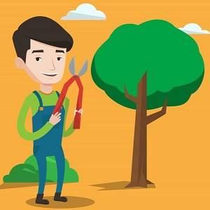 Norwalk Tree Service